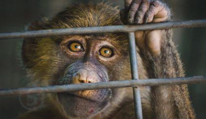 10 животных — преступников!