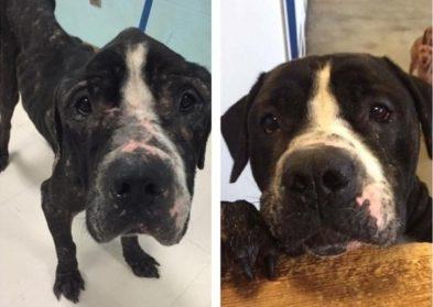 25 чудесных восстановлений собак после спасения, которые вернут вашу веру в человечество