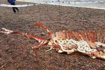 Владельцы собак, выгуливавшие питомцев на берегу Лох-Несс оторопели, обнаружив Это…