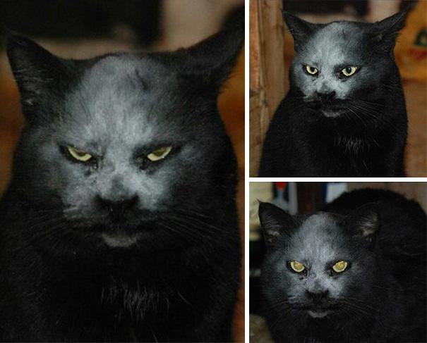 Кот обсыпан мукой и выглядит, как демон!