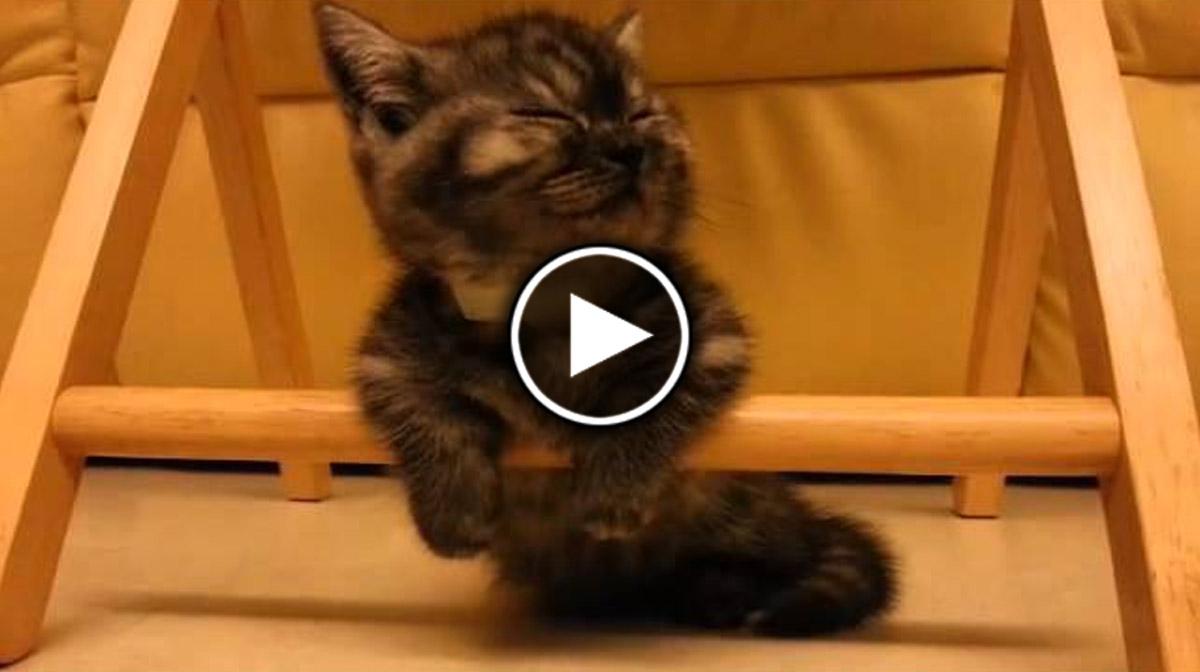 Как сделать так чтобы кот спал со мной