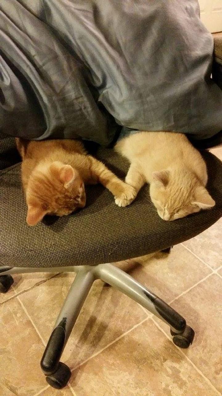 Держать свою кошку на руках во сне