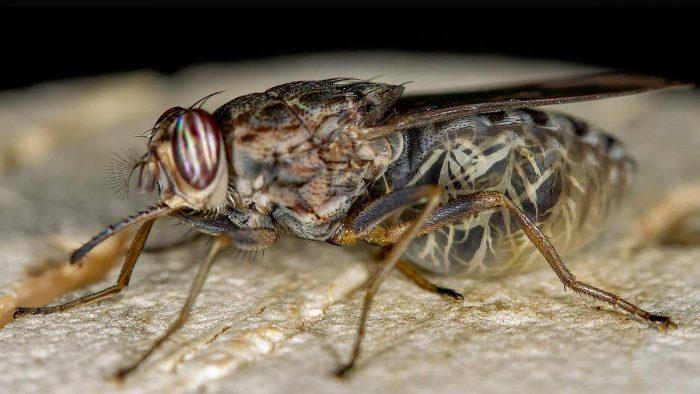 какой вред несут паразиты организму